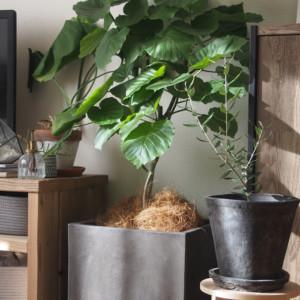 観葉植物で今時のおしゃれな空間へ