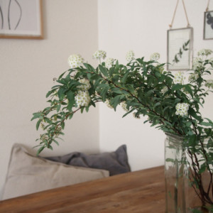 枝ものを飾るだけで季節感あるインテリアに~春:コデマリ~